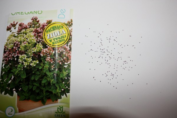 Nasiona oregano