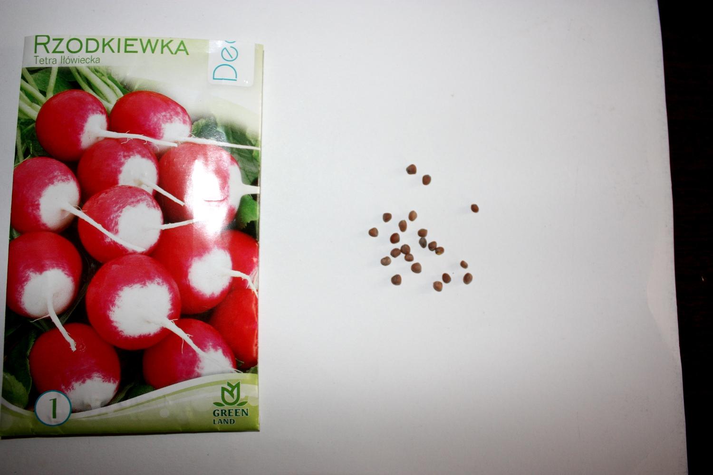 Nasiona rzodkiewki