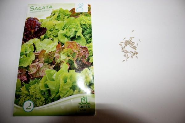 Nasiona sałaty