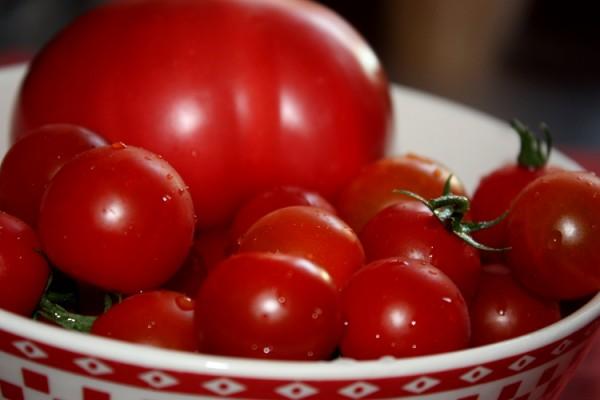 Zbiory pomidorów